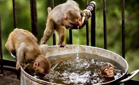 Monkey water